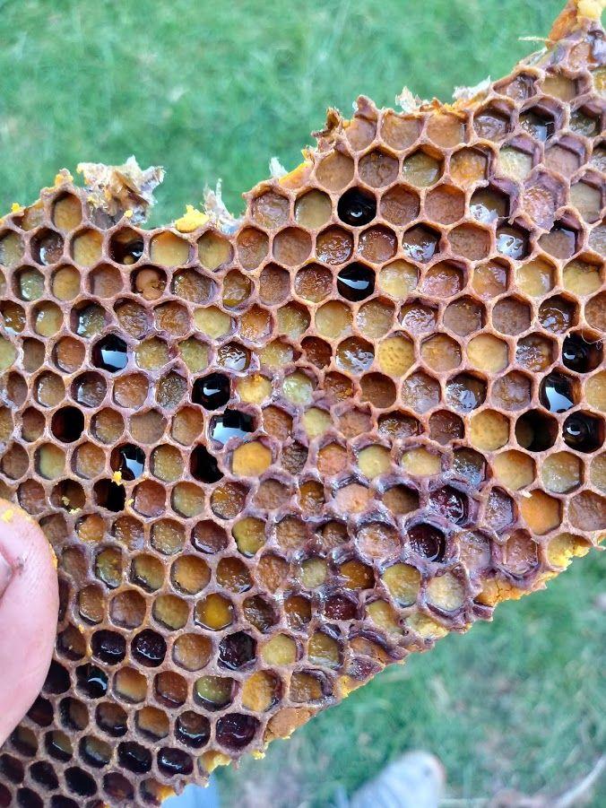 ein Stück Bienenbrot